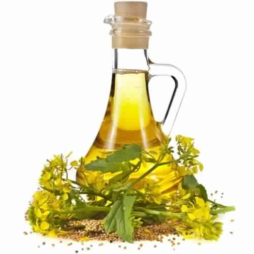 Mustard-Oil-liste-dix-herbes-et-epices-aident-la-perte-de-poids