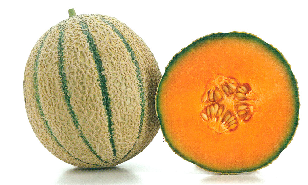 Melon-brode-regime-naturel100