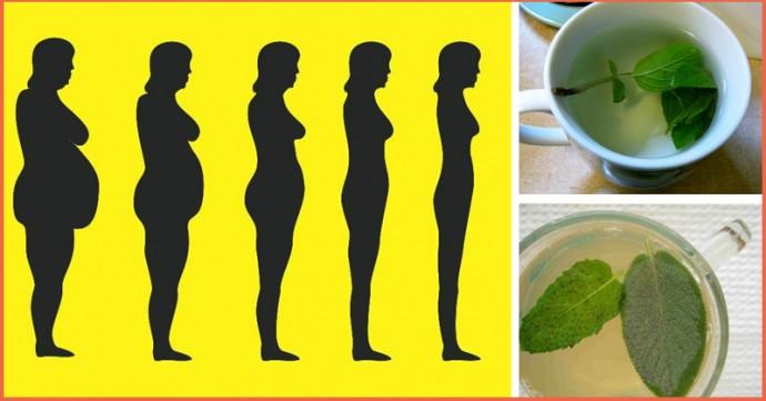 10 meilleures plantes pour perdre la graisse du ventre, éliminer les toxines et booster le métabolisme