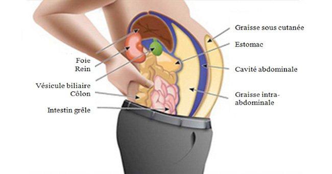 Les toxines stockées dans les cellules graisseuses vous font grossir et enfler. Voici comment les éliminer